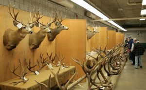 CWSS Horn and Antler Competition